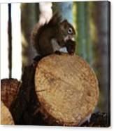 Squirrel Eating Pinecones Canvas Print