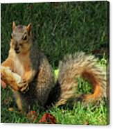 Squirrel Eating Pizza Canvas Print