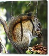 Squirrel Enjoys A Great Meal Canvas Print