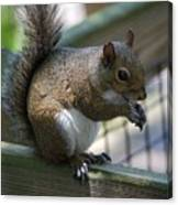Squirrel II Canvas Print