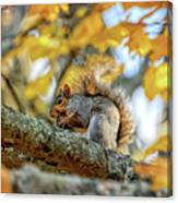 Squirrel In Autumn Canvas Print