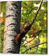Squirrel In Fall Canvas Print