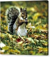 Squirrel In Leaves Canvas Print
