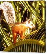 Squirrel In Palm Tree Canvas Print