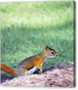 Squirrel In The Park Canvas Print