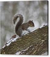 Squirrel In The Snow Canvas Print