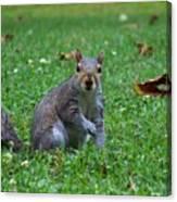 Squirrel Iv Canvas Print
