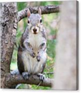 Squirrel Looking At Photographer And Waiting To Be Fed Canvas Print