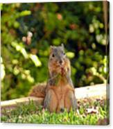 Squirrel On A Log Canvas Print