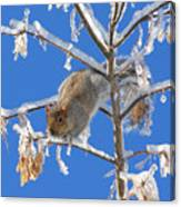 Squirrel On Icy Branches Canvas Print