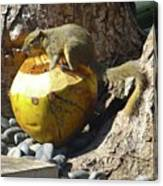 Squirrel On The Coconut Canvas Print