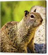 Squirrel On The Rock Canvas Print