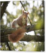 Squirrel On The Spot Canvas Print