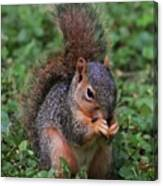 Squirrel Portrait # 3 Canvas Print