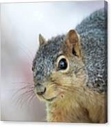 Squirrel Portrait Canvas Print