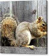 Squirrel - Snack Time Canvas Print