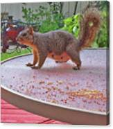 Squirrel Visits Me Canvas Print