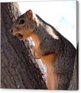 Squirrel With A Nut Canvas Print
