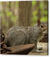 Squirrel With Anchor Canvas Print