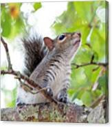 Squirrel With Personality Canvas Print