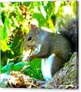 Squirrel1 Canvas Print