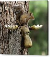 Squirrelly Thoughts Canvas Print