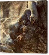 Squirrels - A Family Affair Xi Canvas Print