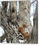 Squirrels At Play Vertically Canvas Print