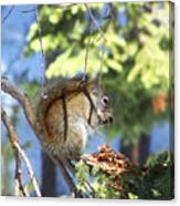 Squirrels Spring Meal Canvas Print