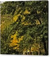 Seeing The Beauty In The Trees Canvas Print