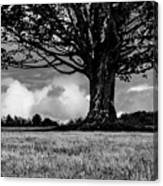 St. Benedict Abbey Single Tree In Summer Canvas Print
