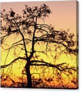 St Johns River Tree Canvas Print