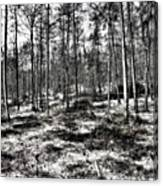 St Lawrence's Wood, Hartshill Hayes Canvas Print
