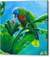 St. Lucia Parrot And Bwa Pain Marron Canvas Print