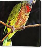 St Lucia Parrot Canvas Print