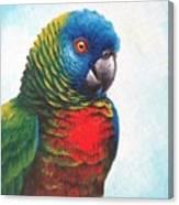 St. Lucia Parrot Canvas Print