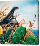 St. Lucia Whiptail Canvas Print