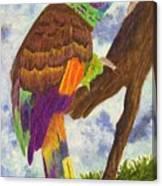 St. Vincent Parrot Canvas Print