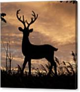 Stag 002 Canvas Print