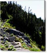 Stairs Along Skyline Trail Canvas Print