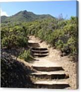 Stairway To Heaven On Mt Tamalpais Canvas Print