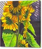 Stalk Of Sunflowers Canvas Print
