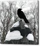 Crow Stance On Cold Stone Canvas Print