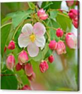 Stand Alone Japanese Cherry Blossom Canvas Print
