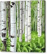 Stand Of Birch Canvas Print
