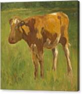 Standing Calf Canvas Print