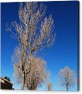 Standing Tree  Despite Canvas Print