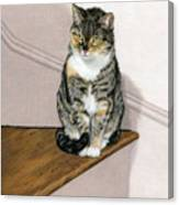 Stanzie Cat Canvas Print