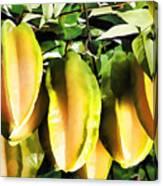 Star Apple Fruit On Tree Canvas Print