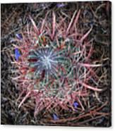 Star Cactus Pink-aqua-blue Canvas Print